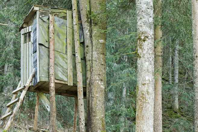shutterstock_375186886 Your Quick & Definitive Guide On How To Build A Tree Stand