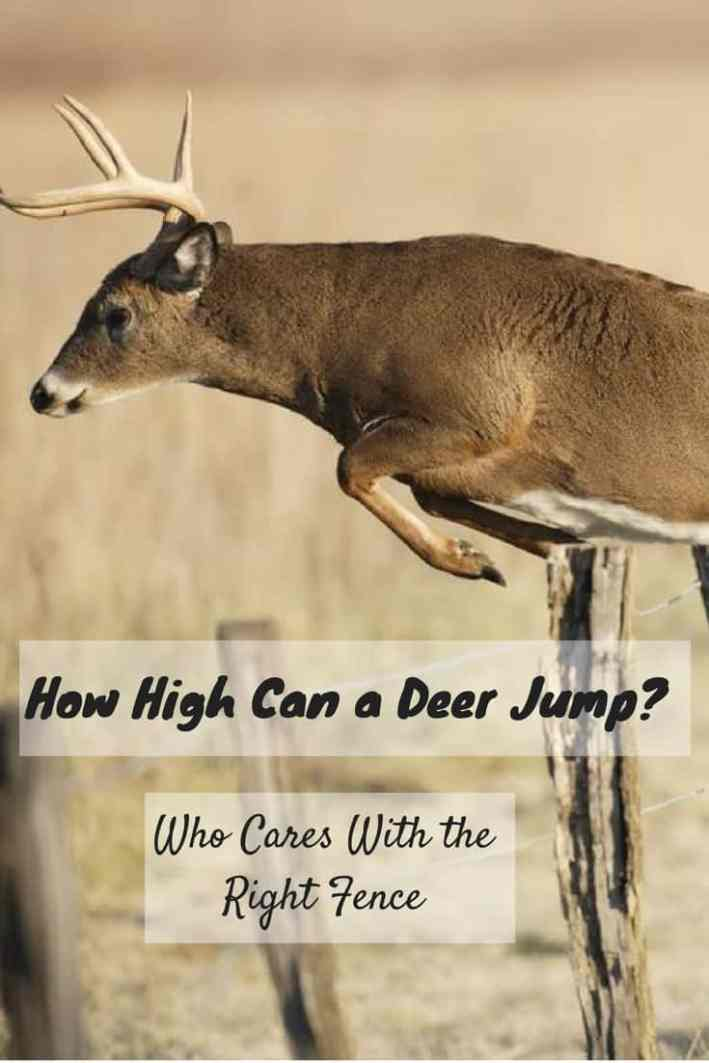 How High Can a Deer Jump-