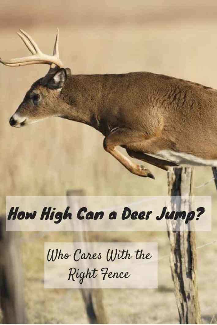 How High Can a Deer Jump-