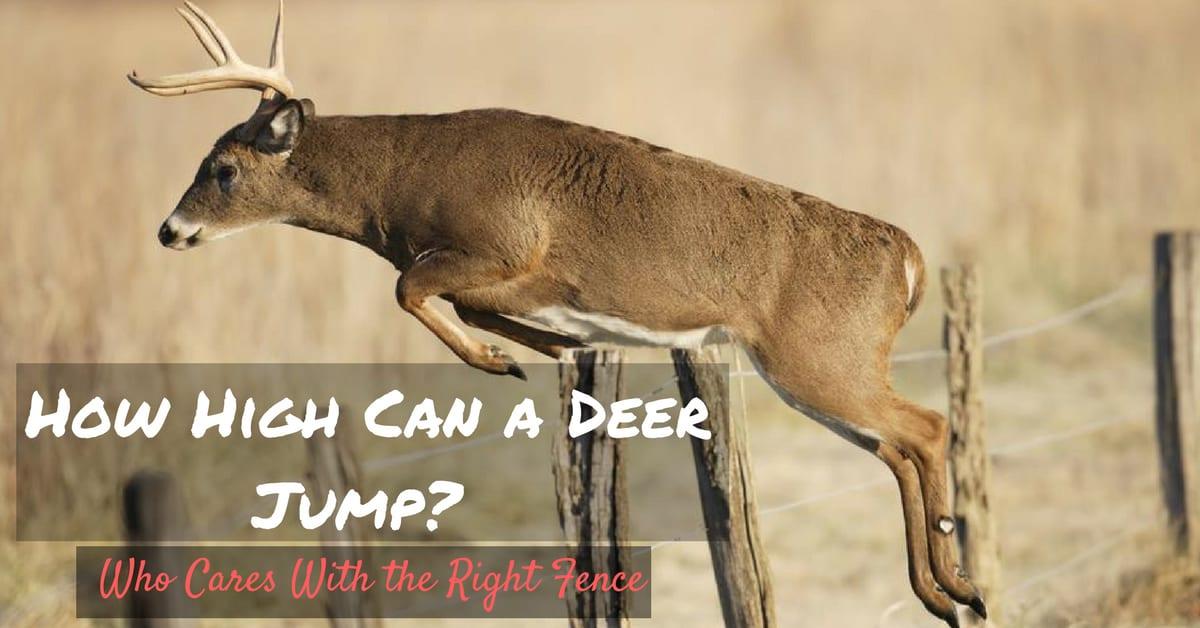 How High Can a Deer Jump