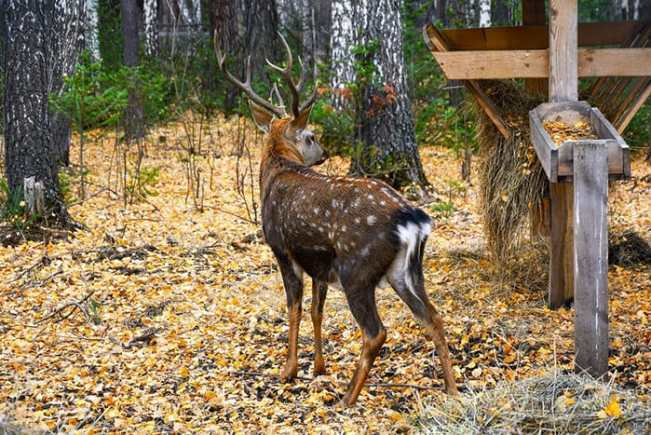 The Best Deer Feeders [It's Time To Attract More Deer!]