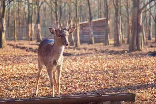The Best Deer Feeders [It's Time To Attract More Deer!]