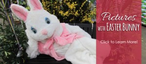 Easter Bunny Pictures @ Dees' Nursery