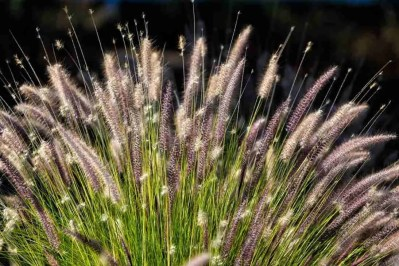 Print of Wild Grass in Spring Bloom Photo