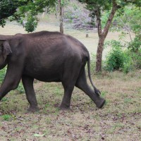 Jumbo Jaunts at Nagarhole
