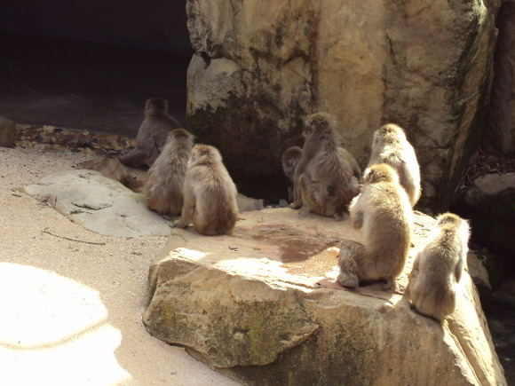 Monkeys loitering in the park