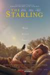 The Starling (2021) WEB-DL 480p & 720p & 1080p