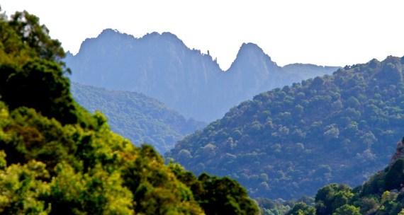 Foresta demaniale di Gutturu Mannu, Monte Arcosu, Sardaigne, Sardinia, Sardegna