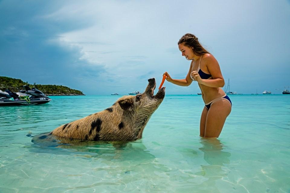 Bahamas. Atlantis Resort. Family Vacation. Pig Beach.