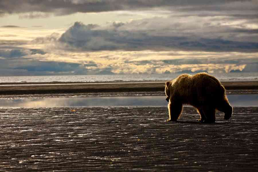 Trump Administration Finalizes Extreme Predator Hunting Rules in Alaska National Preserves