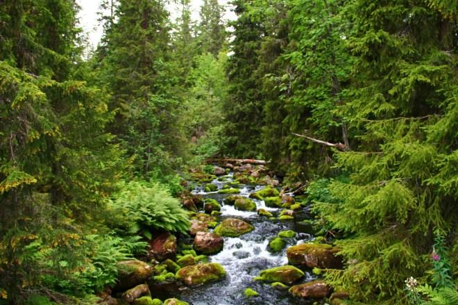 Hiking in Fulufjället National Park (3)