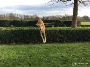 Jumping the bushes