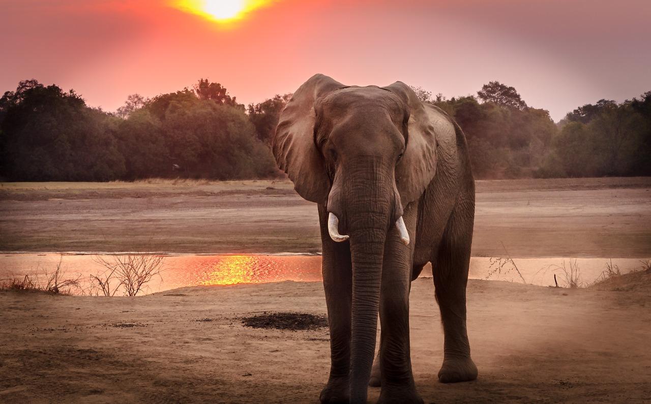elefante em paisagem natural com por do sol ao fundo