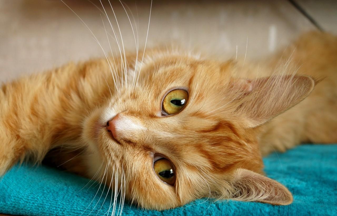 gato deitado olhando pra foto