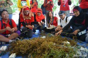 Proses pembibitan rumput laut