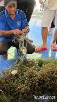 Pak Nurhayat - Nelayan Rumput Laut Pulau Pari