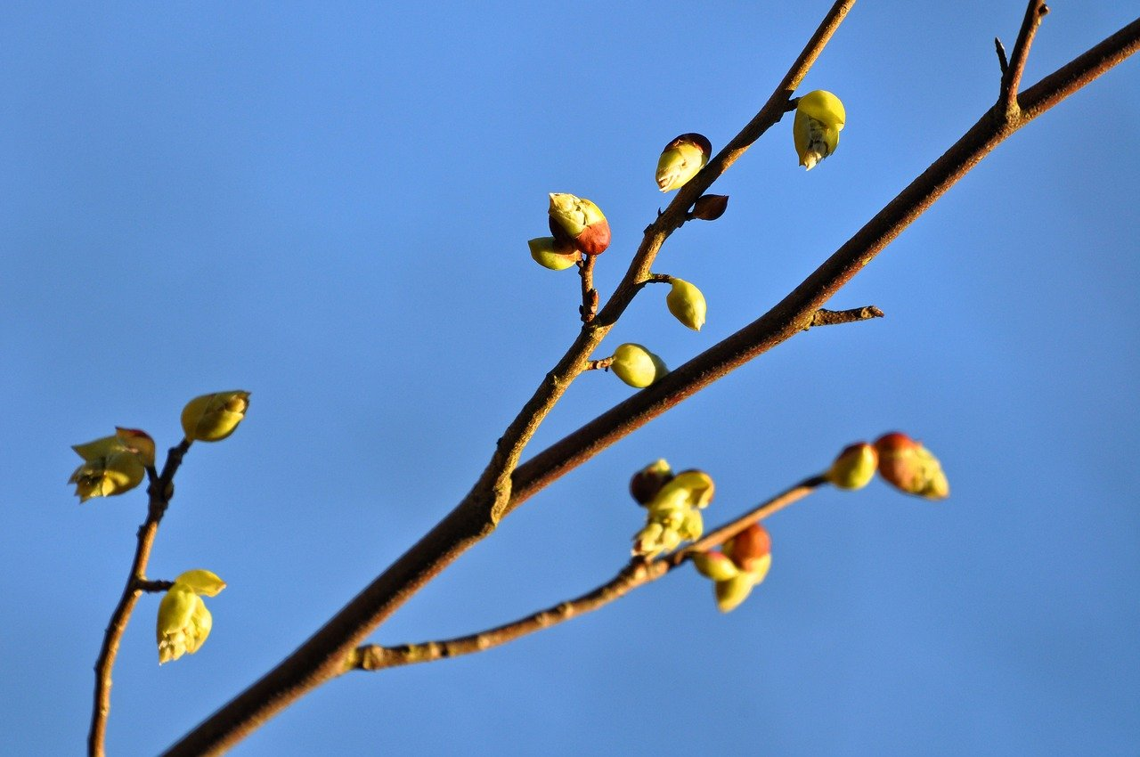 What is budding? plants, animals, and Examples