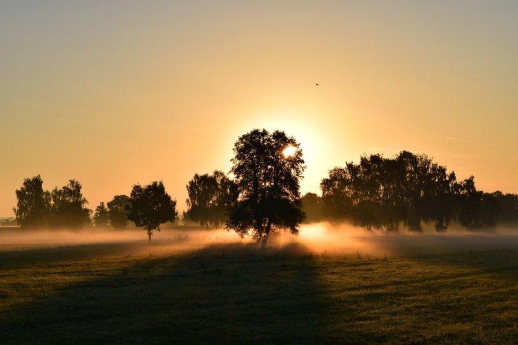 Un lever de soleil derrière un arbre. Défis 30 jours