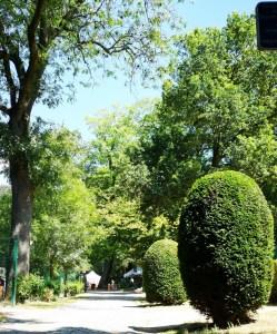 11.09 -Conférence)promenade : découverte des arbres du parc de Roodebeek