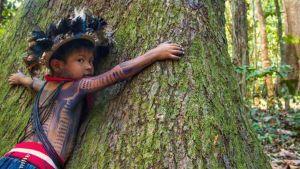 Aide d'urgence octroyée aux populations indigènes d'Amazonie