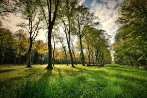 Mesures renforcées dans les parcs bruxellois