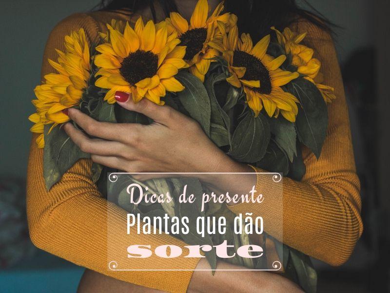 Dicas de presente: Plantas que dão sorte