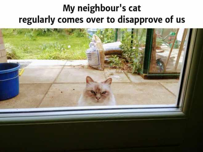 Funny Cat Memes to make your day!