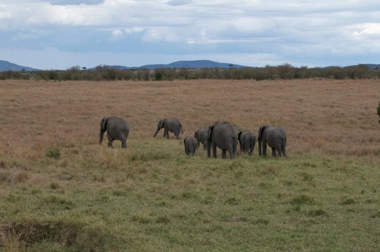 Olifanten safari groeiblog