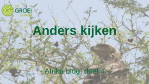 Safari Blog deel 4 De Groeicoach
