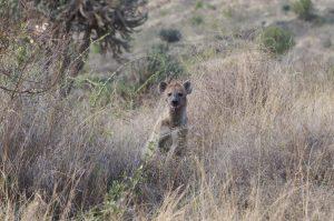 Hyene Safariblog De Groeicoach