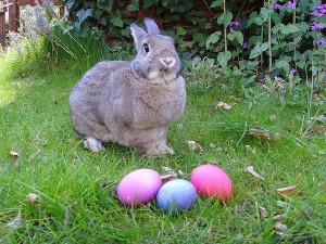 easter-bunny-with-eggs