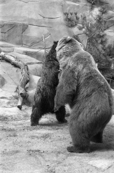 John Ball Zoo GR