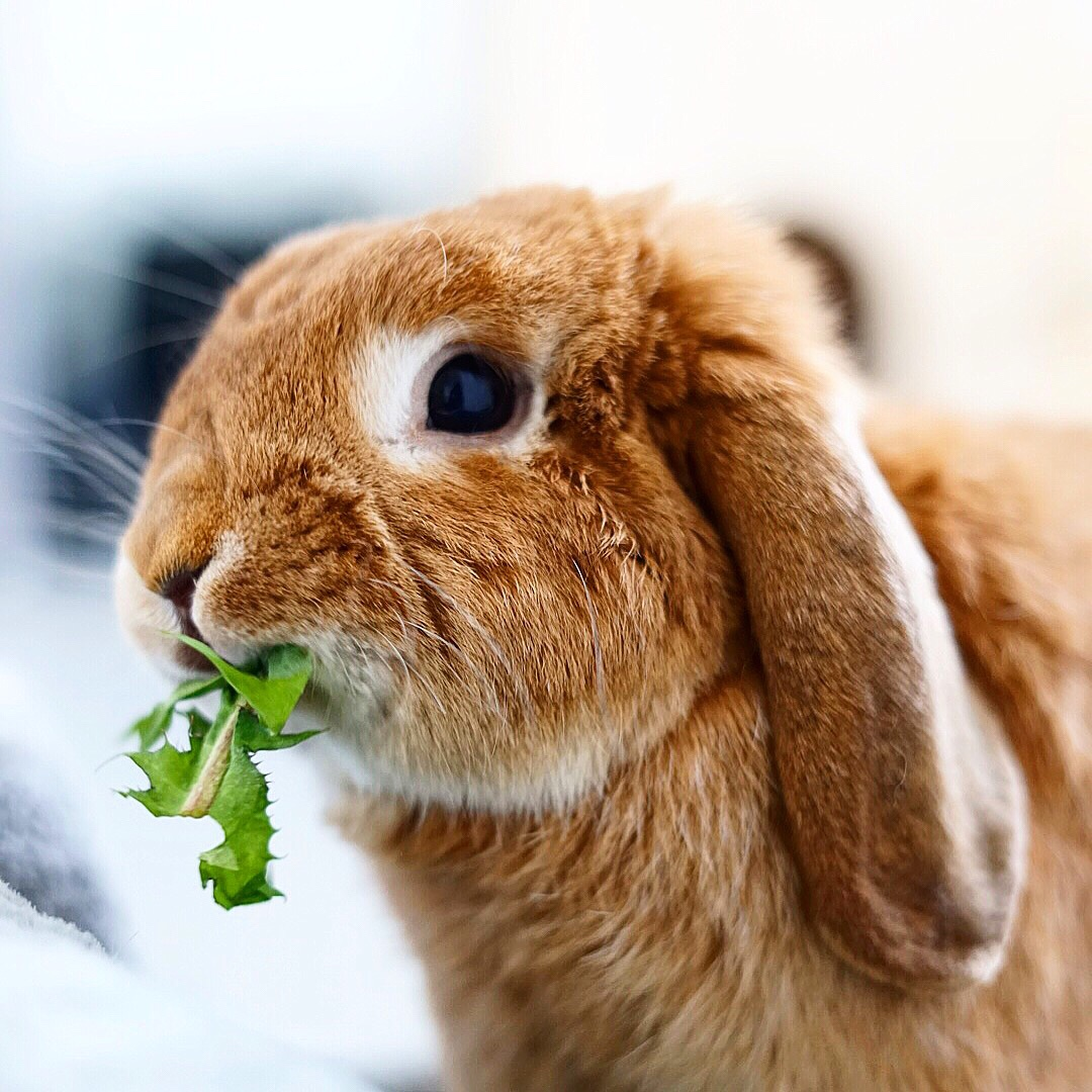 Hoe word ik veganist? Ik kan namelijk niet zonder kaas!