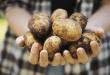 kartoffel Naturheilkunde