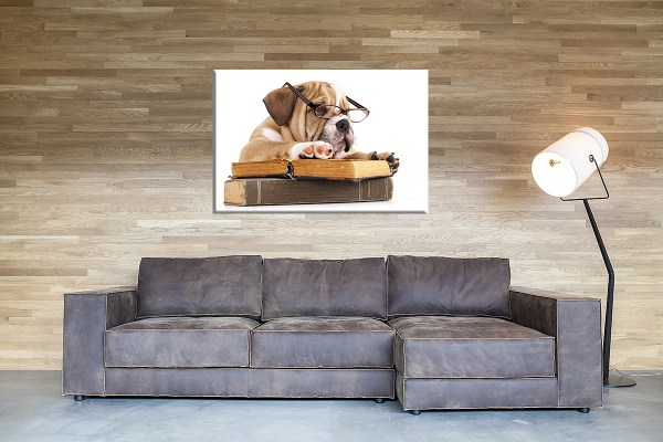 DB_1700_Englische_Bulldogge_Couch 1