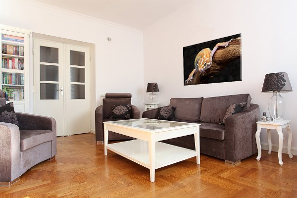 DB_1743_Gecko_Couch 3