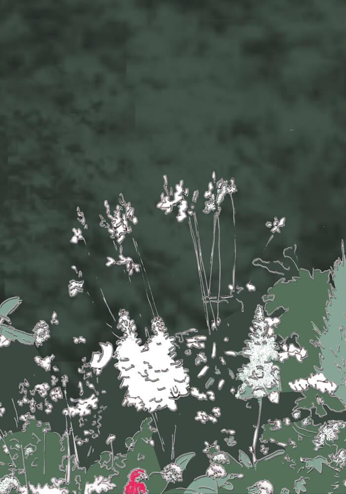 Grafik: Weiße Blüten mit einer einzelnen pinkfarbenen dazwischen