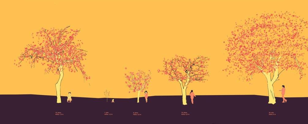 Übersichtsbild von Apfelbäumen in verschiedenen Alterstufen und Kindern im passenden Alter daneben, Skizze, coloriert