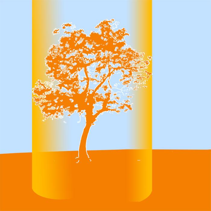 Skizze coloriert, großer Baum mit Markierungen Kronenrand und Gießbereich