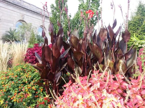 Gorgeous Lillies