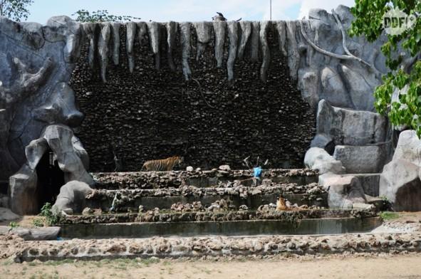 tiger-temple-tailandia-banho-tigres