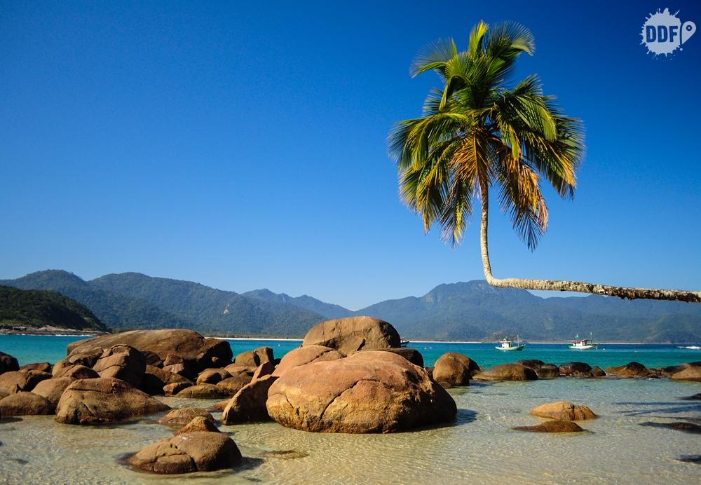 coqueiro-torto-praia-aventureiro-ilha-grande-angra-dos-reis