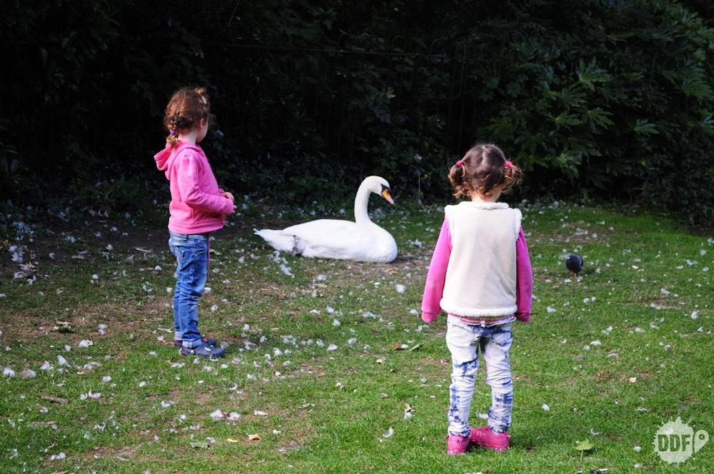 dublin-saint-stephen-green-park
