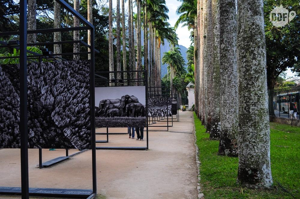 jardim-botanico-rio-de-janeiro-museu-meio-ambiente-brasil