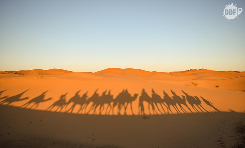 Sombra dos camelos no Deserto do Saara, Marrocos