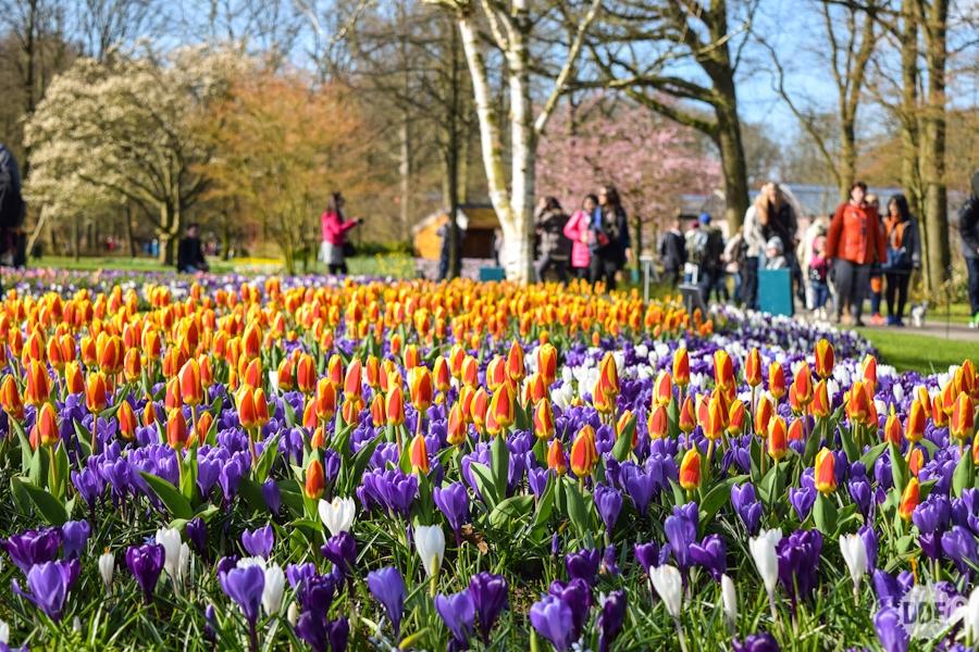 holanda-amsterdam-foto-tulipas-parque-das-flores-keukenhof-campos