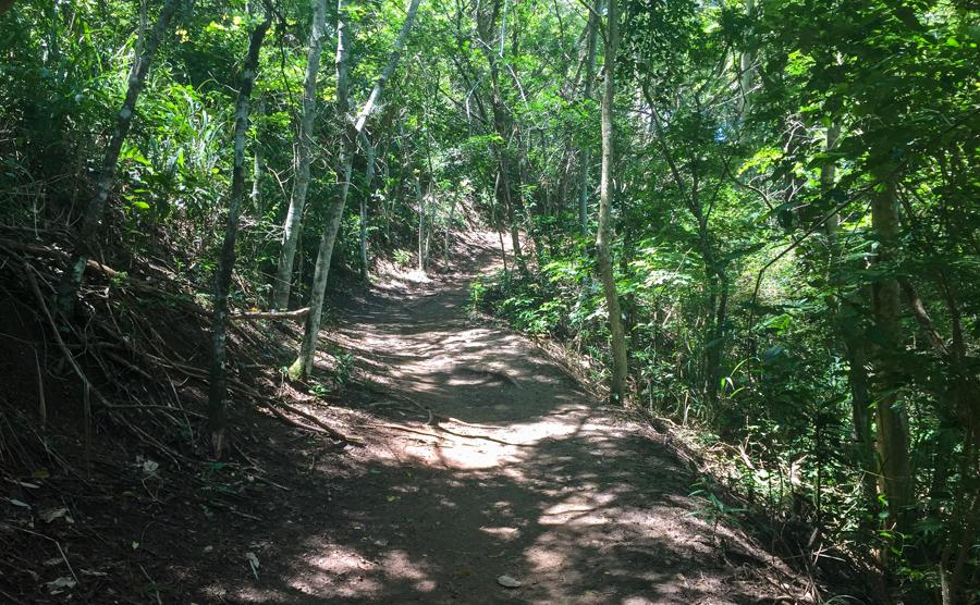 pedra do telegrafo como e a trilha rio de janeiro passeio carioca barra de guaratiba