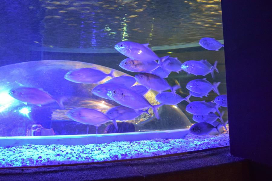 aquario-rio-de-janeiro-tanque-cardume