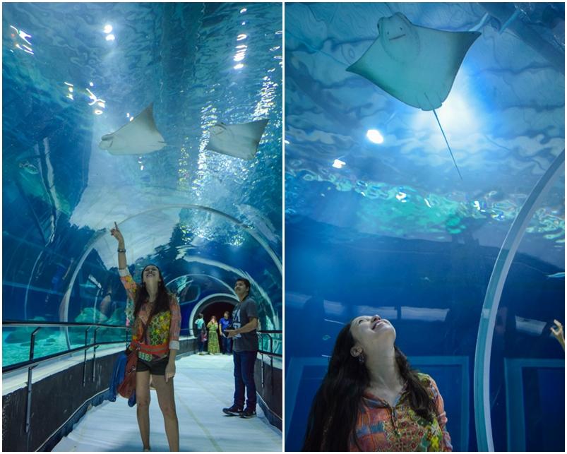 aquario-rio-de-janeiro-tunel-tanque-oceanico-raias