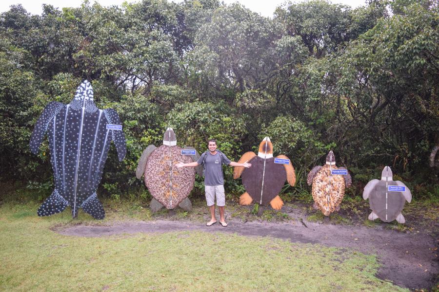 projeto tamar museu tartarugas marinhas florianopolis